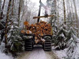 Свой Русский лес в Ярославле